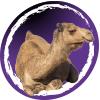 Kamelensnacks